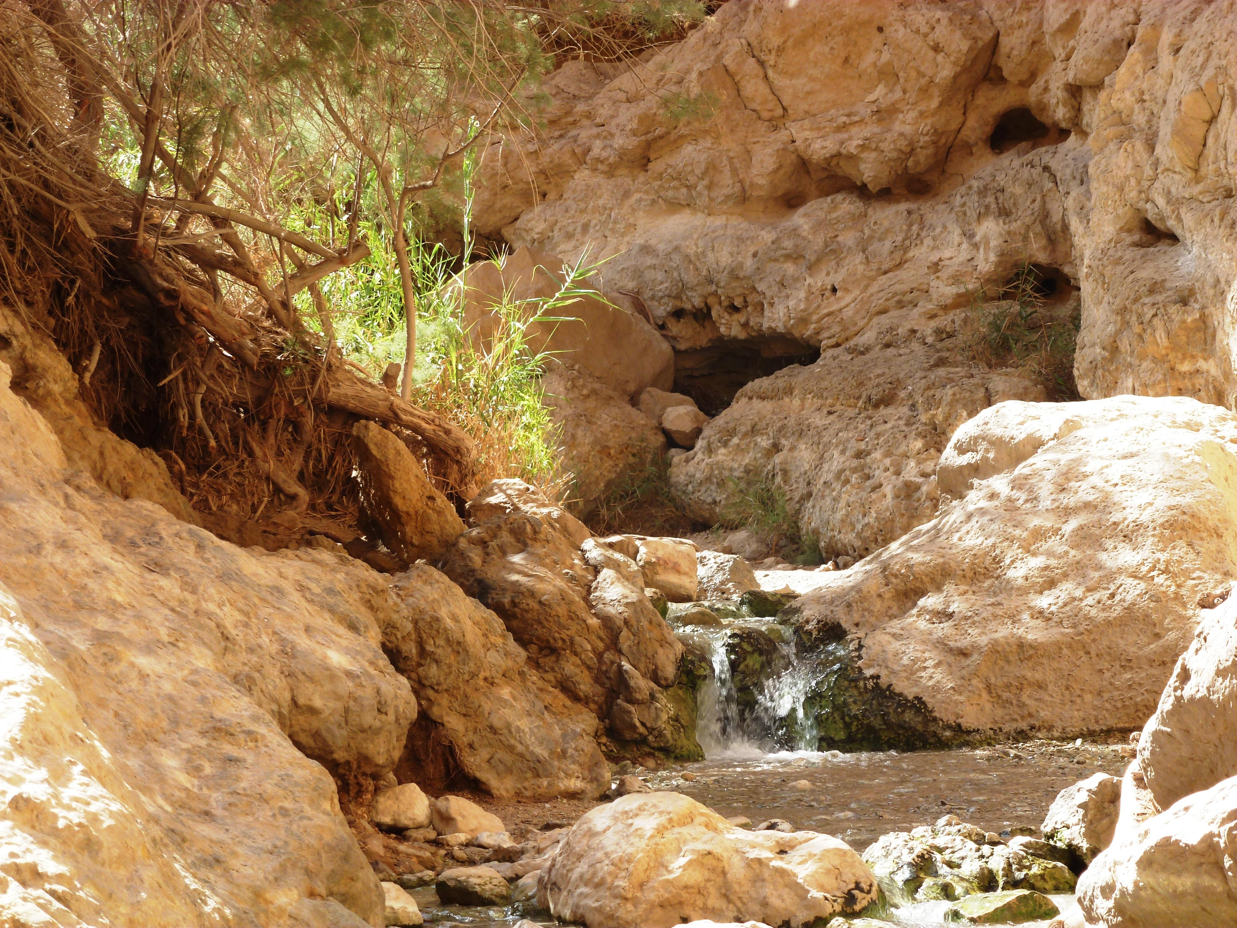 מבועי מים במדבר, א