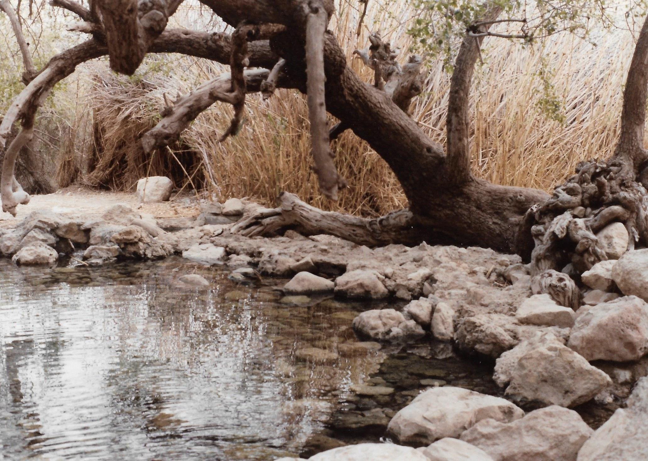 מבועי מים במדבר, ג