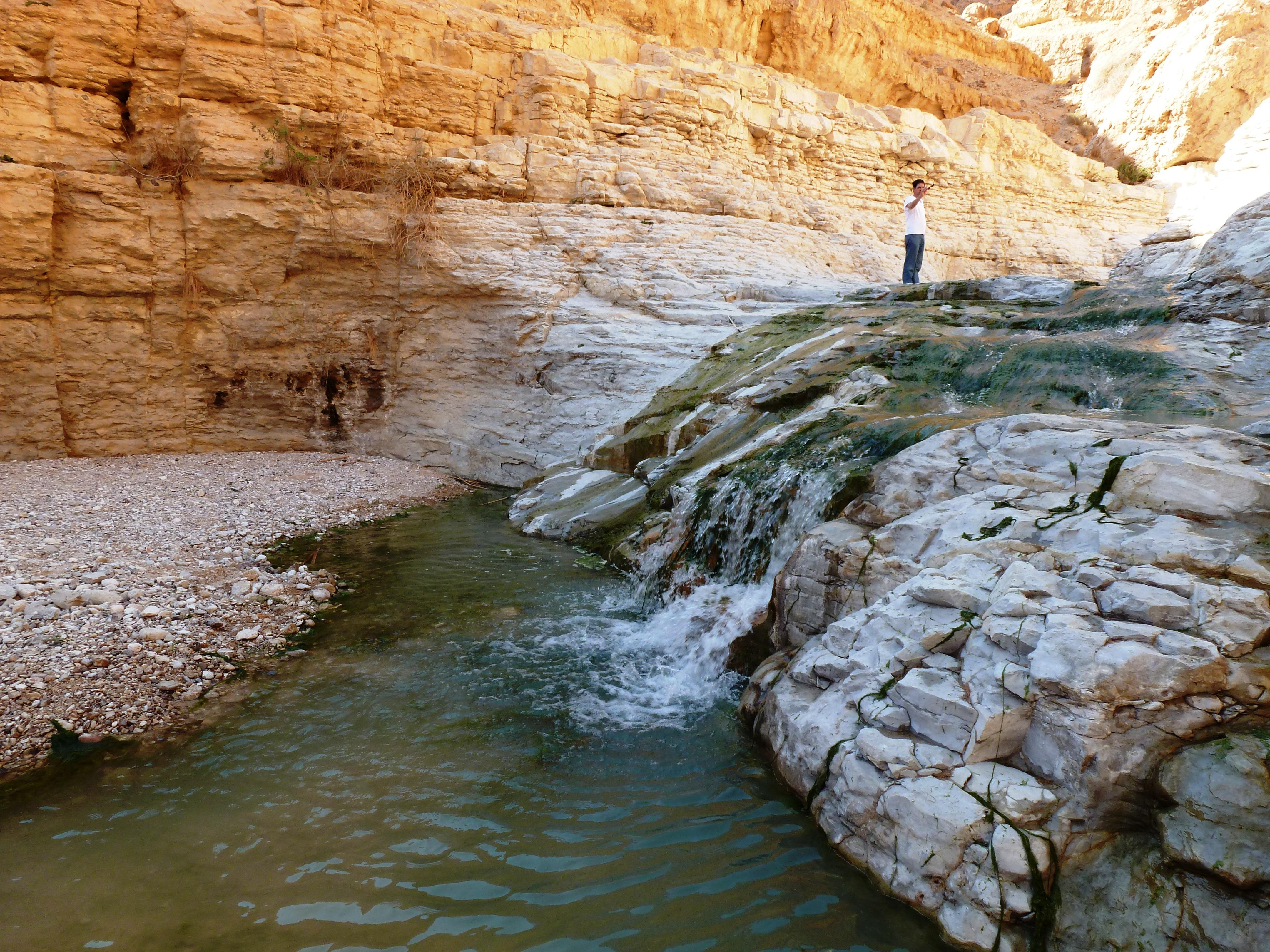 מבועי מים במדבר, ד